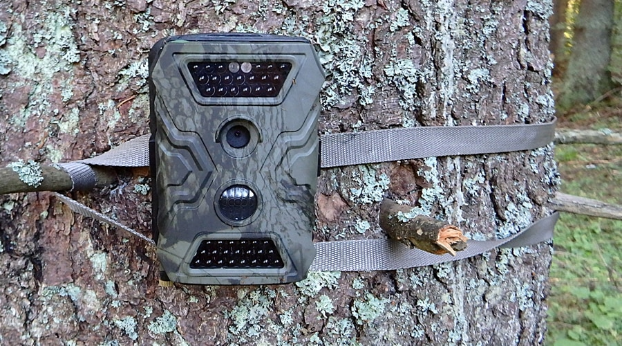 best affordable trail camera for hunting