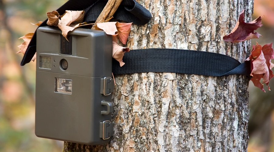 best place to put a trail camera