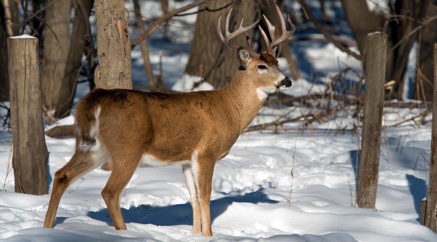 How long is deer hunting season?