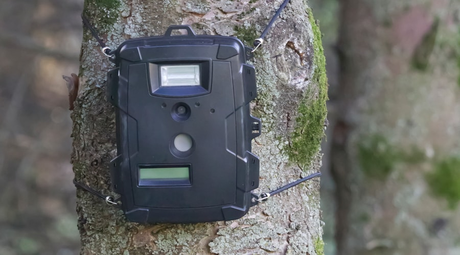 how often should i check trail cameras