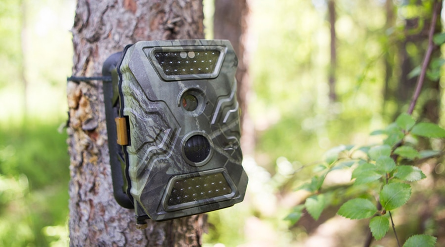 what is a good trail camera to buy