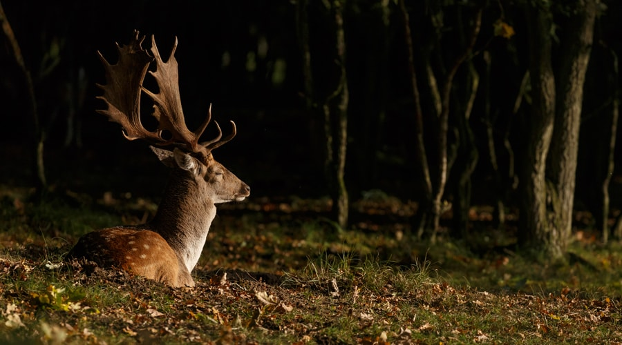 why is my trail camera not taking night pictures